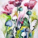 Mohnblüten und Kapseln